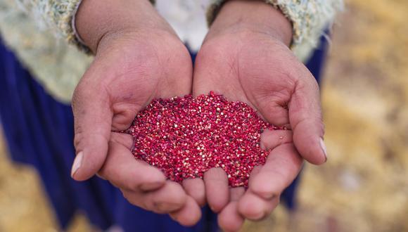 La apertura de este mercado beneficiará a unos 20,000 productores de quinua de las regiones de Cusco, Puno, Ayacucho, Huancavelica, Junín  y Arequipa. (Foto: GEC)