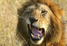 León mata a hombre que vivía cerca del Parque Nacional de Nairobi
