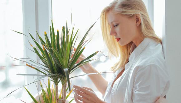 La jardinería puede ayudarnos a calmar la agitación y la ansiedad. (Foto: Pexels)