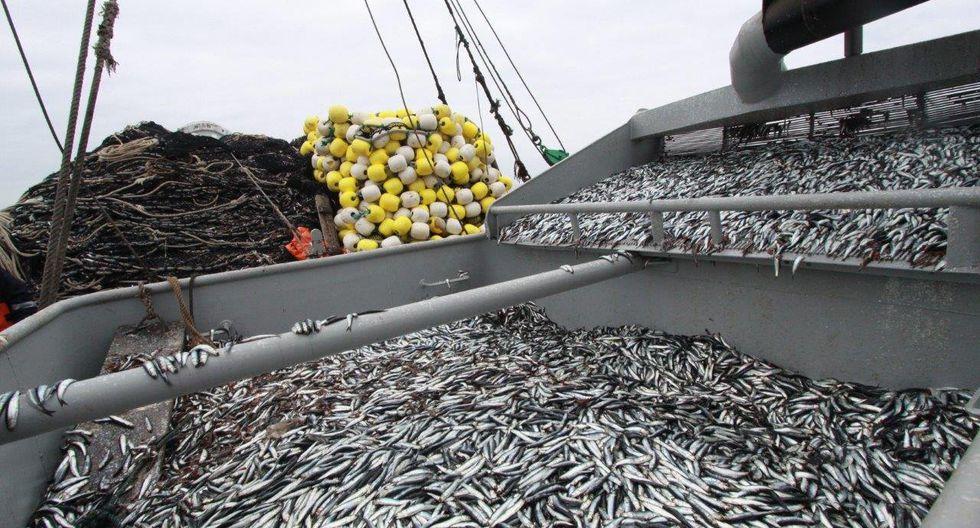 El sector también está evaluando la posibilidad de autorizar el inicio de una pesca exploratoria del calamar. (Foto: GEC)