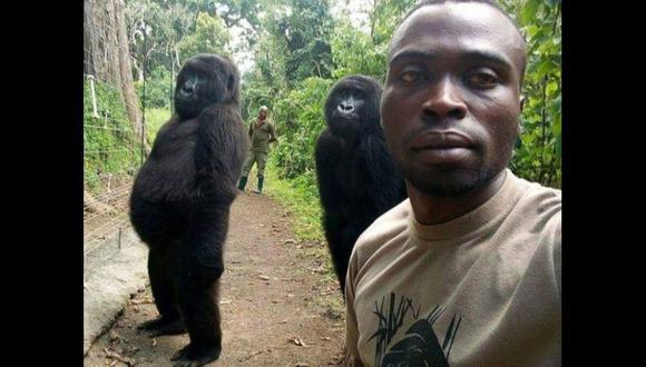 ¿La fiebre de los selfies llegó a los gorilas? (Foto: Mathieu Shamavu)