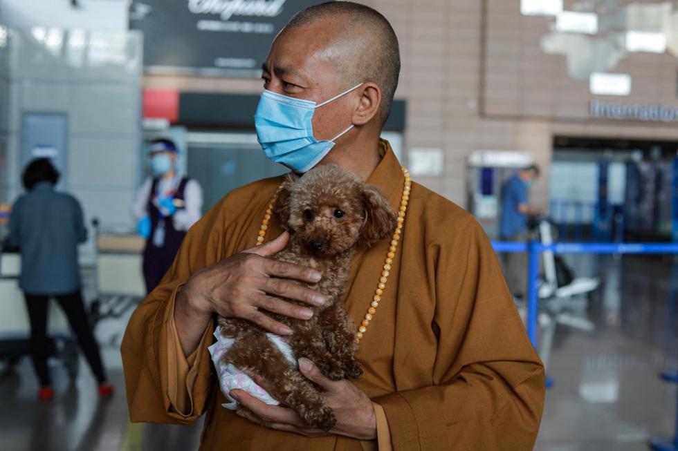 Imagen muestra al monje budista Zhi Xiang cargando un perro rescatado antes de enviarlo a los Estados Unidos en el Aeropuerto Internacional de Pudong en Shanghái. (Jessica YANG / AFP).