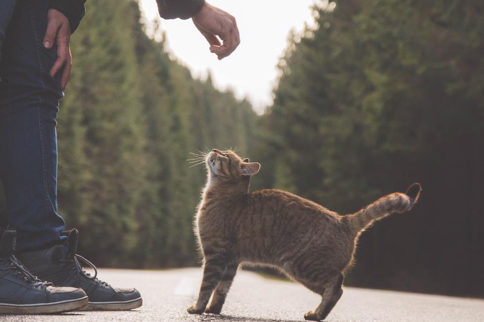 Un gato fue ayudado por un policía de tránsito para cruzar una congestionada calle. (Foto: Pixabay/Referencial)