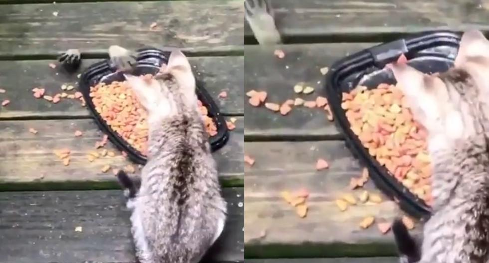 Un video viral muestra cómo un mapache roba comida a dos gatitos de una manera muy particular. (Fotos: Erena Disva en Facebook)